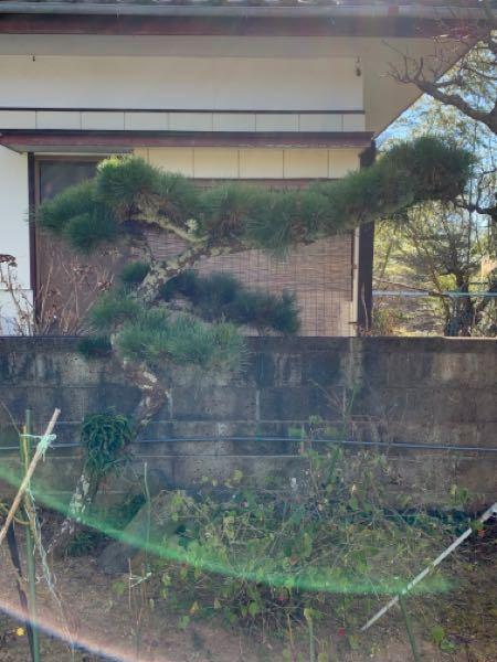 松の木を買い取ってくれる業者ってあるんでしょうか?