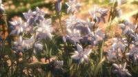 進撃の巨人のこの花はなんの花ですか?また何か意味があるんですか?花言葉とかはありますか?