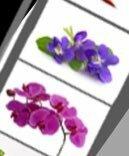 この写真の花二つの名前を教えてください。 恐らくどちらもアルファベットで6文字になると思われます。