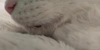 飼い猫がここ数日ヨダレと下痢をします。 先週はくしゃみ、声ガレ、嘔吐の症状があり病院に行きました。処方された薬を飲みそれらの症状はなくなりました。 しかし、今度はヨダレがダラダラ出てきて、下痢をする...
