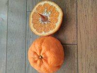 この柑橘類はなんでしょうか。 デコポンの凸がへこんでいるのでしょうか? 詰め合わせセットを購入したのですがでデコポンのジューシーさがありませんので違う種類かと、質問させて頂きます