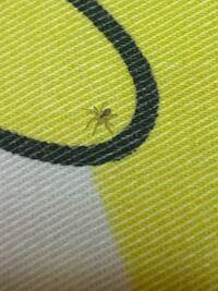 さっき寝ようと思って布団敷いてたら、枕にダニみたいなのがいてびっくりしたんですけど、これって蜘蛛の赤ちゃんですか?