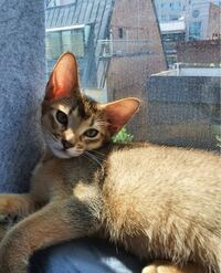 この猫の種類を教えて欲しいです ♀️ NCTのテンくんが飼っている猫です