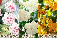 好きな花の匂いは? (^。^)♪  1、沈丁花(ジンチョウゲ) 2、薔薇(バラ) 3、金木犀(キンモクセイ) 4、ジャスミン 5、山茶花(さざんか) 6、ゆうすげ 7、水仙 8、クチナシ 9、白檀(びゃく...