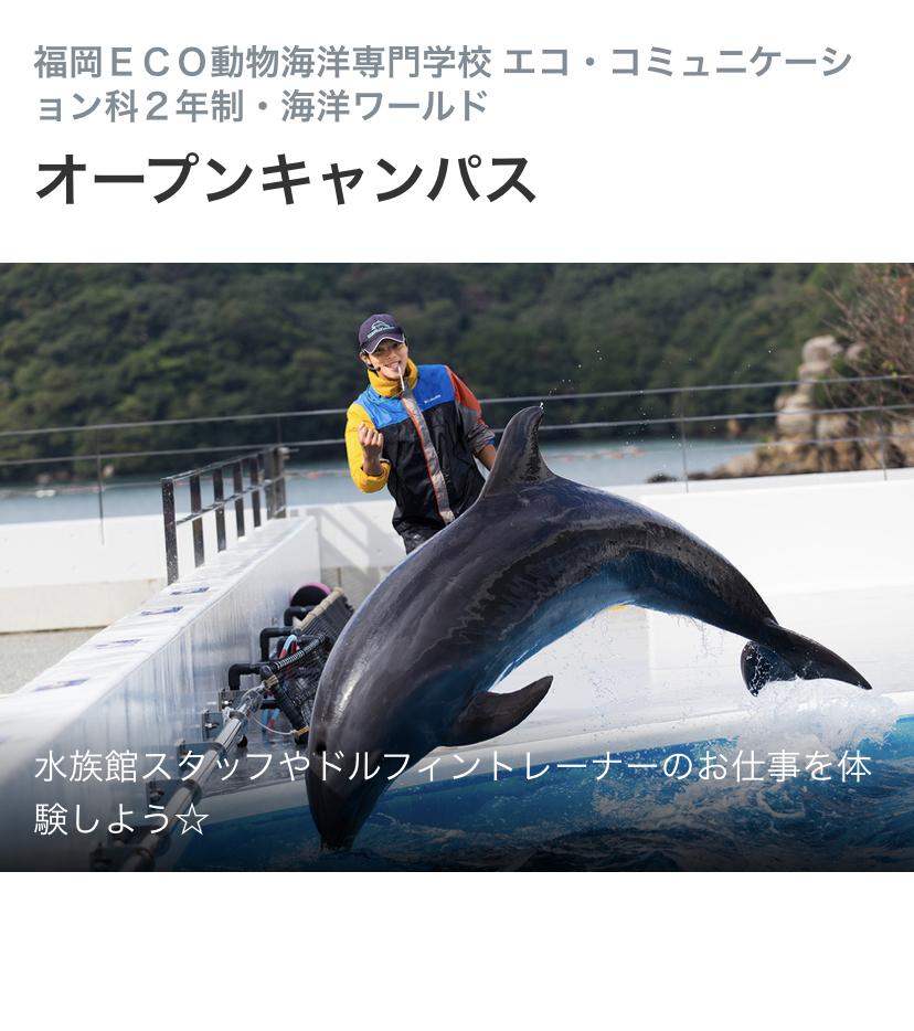 こちらの写真のユニフォームはどこの水族館のものですか?