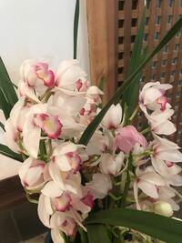 このお花の名前をご存知の方、 どうかご教示いただけないでしょうか?