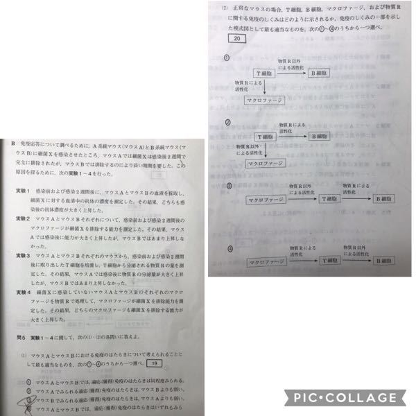 問題番号20、答えは①なのですが、物質Rが分かりません。僕の考えでは、サイトカインなのではないかと思うのですが…どうでしょうか? ただ、その場合サイトカインはB細胞・マクロファージともに活性化さ...
