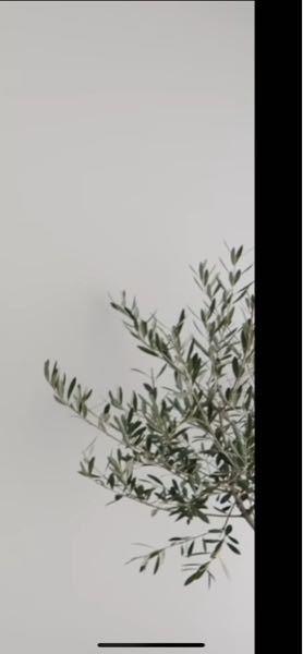 写真の植物の名前教えて頂きたいです!