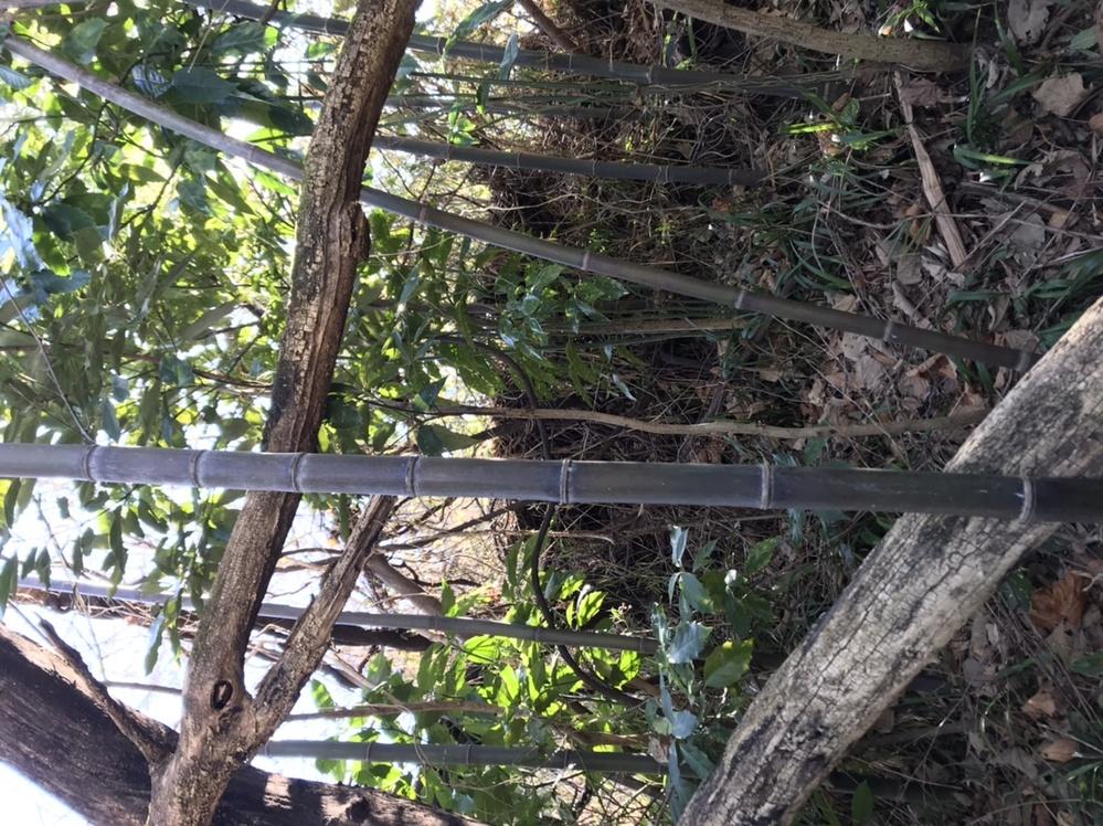 これは何竹でしょうか…?