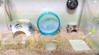 ハムスターの飼育小屋を整えてみました。何か問題等あれば、ご回答願いたいです。コイン50枚。 (補足) 左側には2ウェイヒーターをいれているため、盛り上がっています。 右側の白いのは珪藻土タイルです。