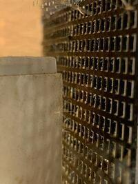 水槽にたんぽぽの綿毛のような微生物?がいたのですがこれはなんという微生物ですか? レインボースネークヘッド水槽です。
