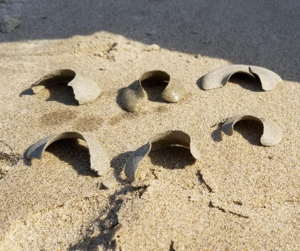 砂浜で見つけました。 砂が固まってできてるようです。 これは、何ですか? わかる方教えてください。