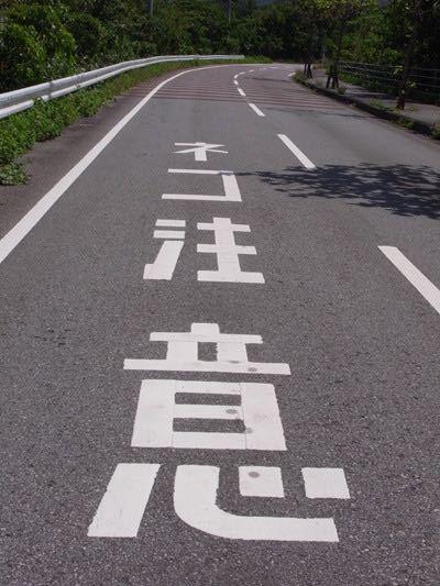 この道路表示。ほんとにこんなのあるんでしょうか?それとも合成でしょうか?