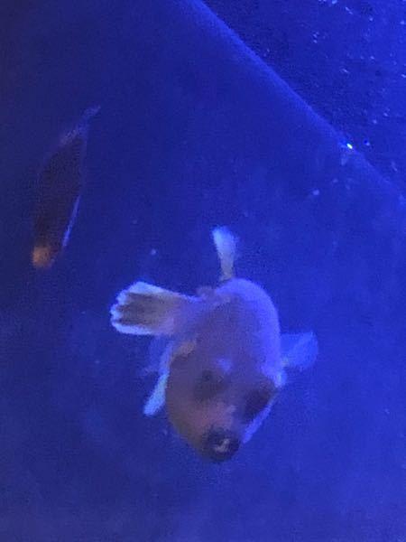 この魚はなんという魚なのでしょうか?