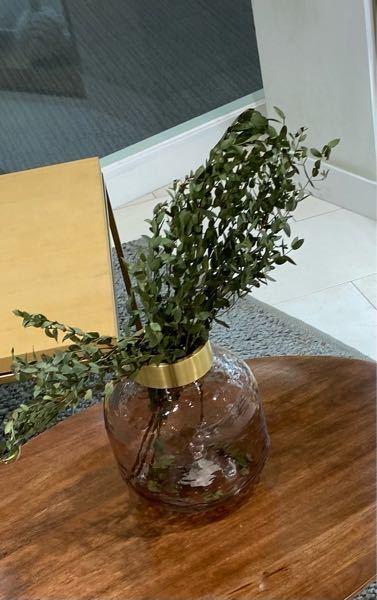 この写真の植物、フェイクだとは思いますがなんていう種類の観葉植物でしょうか?ユーカリですかね?ちょっと違う気がしますが、、、