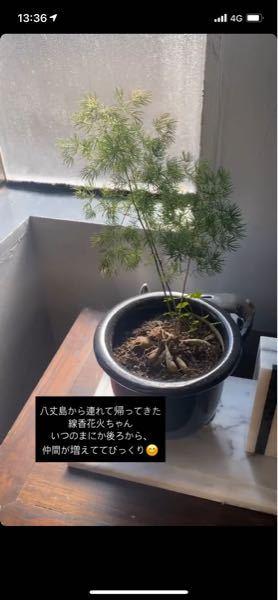 なんて言う植物か分かりますか? 教えてください!