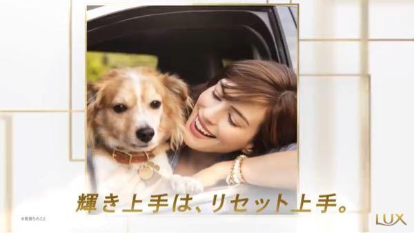 ラックスよCMに出てくる犬です。犬種を教えてください。