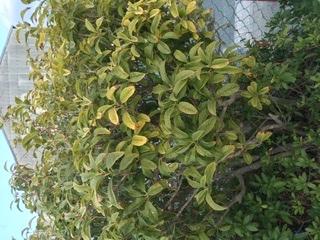 この植物のなまえを教えてください。