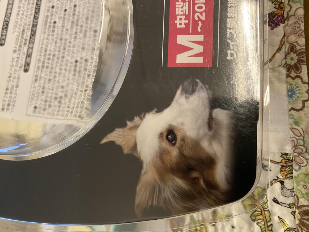 この写真の犬の犬種がわかる方いませんか? いま元保護犬を飼っているのですが、 たまたま買ったリードの犬に そっくりなので、この犬の血が入っているのだろうと思って、 気になって質問しています!