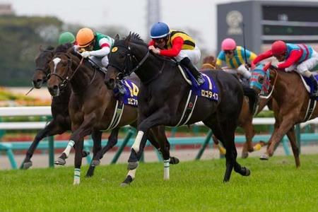 競走馬が、他の馬に敵わないと悟って諦めてしまうこともあるのですか? 馬は基本的に頭が良い動物とされていますよね。 そして、競走馬たちも自分たちが走る速さを競い合わされているのだと理解できてい...