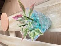 100円ショップで見つけた観葉植物です 可愛くてつい買ってしまったのですが、この葉先がピンクの植物はなんという名前でしょうか? お世話方法を調べたいので教えて頂けると助かります (*'ω'人)お願いします
