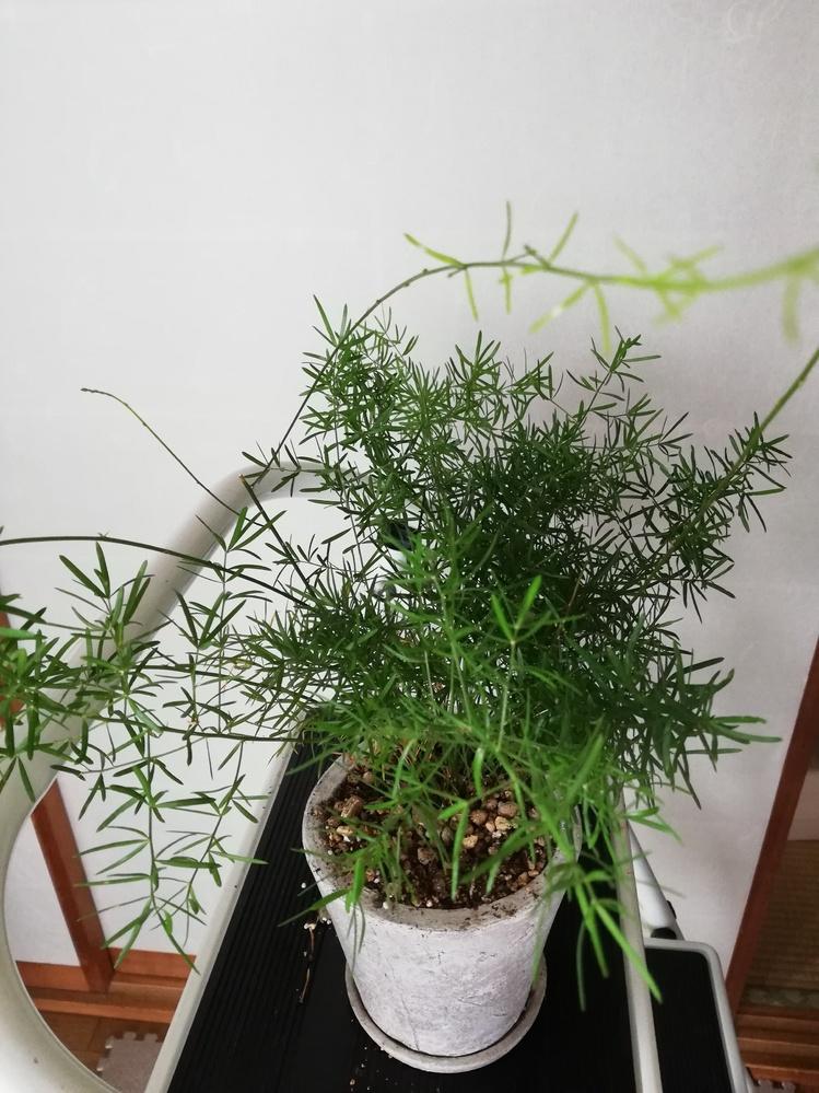 この観葉植物の名前を教えて頂けますか?