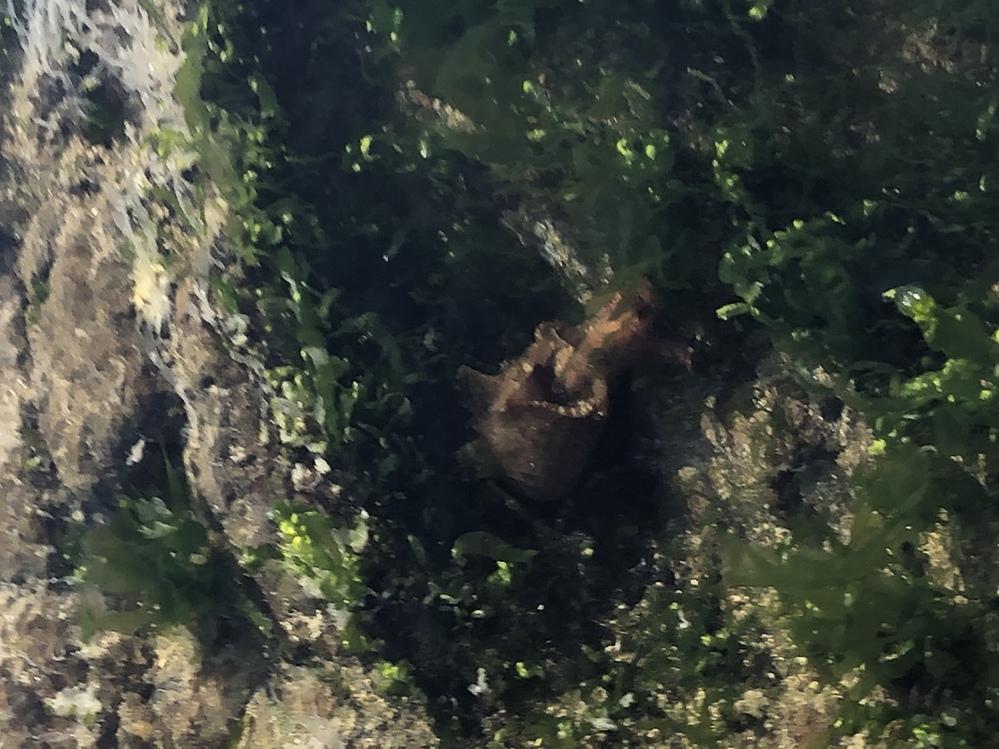 磯にいるこの生き物は何という生き物ですか? 食べられますか