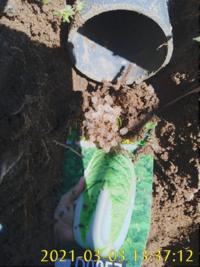 「害虫の卵かもしれない。だったら、きちんと対策しないと」と思って質問しました。 画像を添付しましたが、これは害虫の卵でしょうか?なんでしょう? 本日、家庭菜園の排水について使ってる塩ビパイプの中の土を掃除してたら出てきました。 塩ビパイプは直径5cm位ですから、直径が3mm位のオクラのようなものです。形からして卵かなと思うのですが・・。