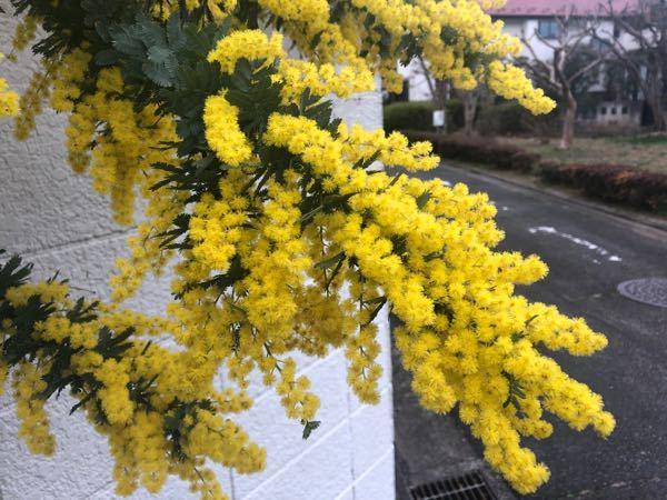 このお花は?
