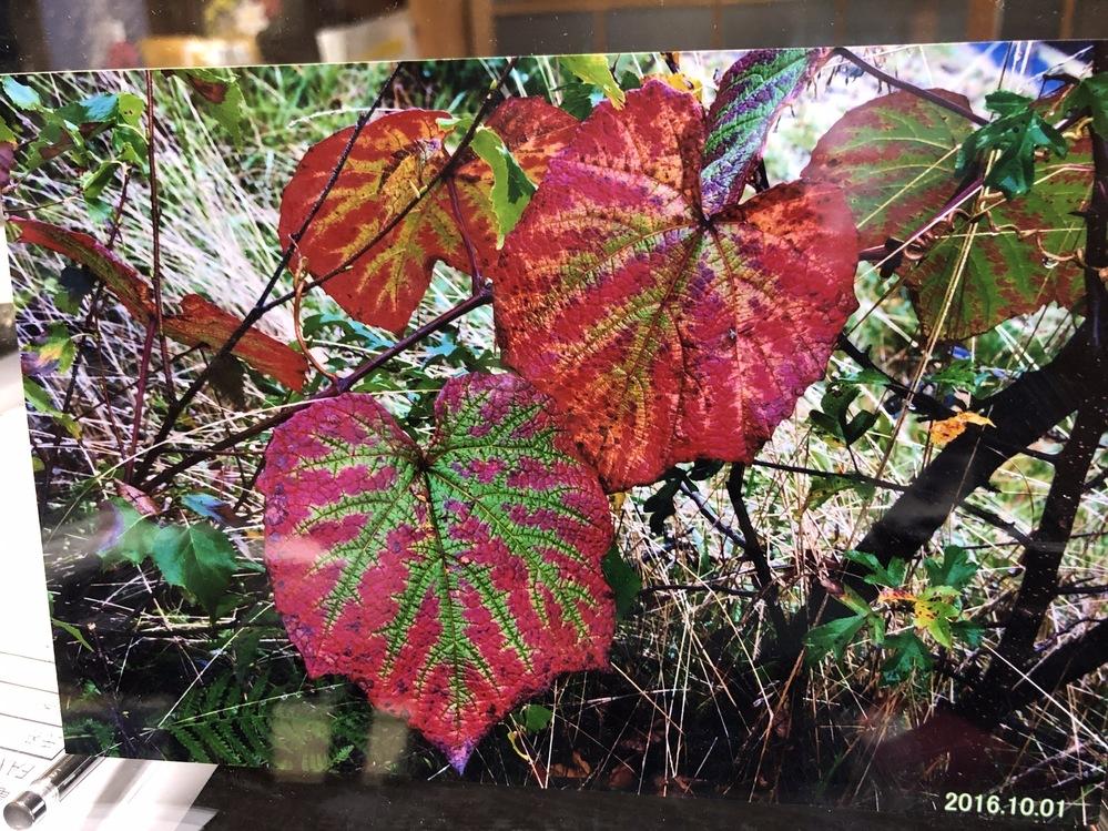 知人が山で 撮影してきました この植物の名前を教えて下さい