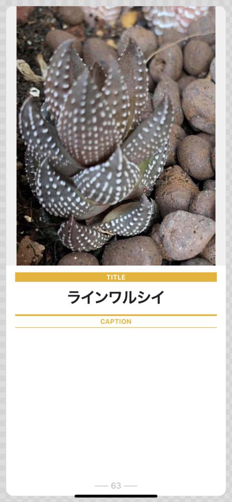 名前不詳?の多肉植物です。 「ラインワルシイ」という名前で売られていました。ただ、その名で検索しても1件もヒットしません。ハオルシア属であろうことは分かるのですが… 十二の巻、白蝶、はいっしょ...