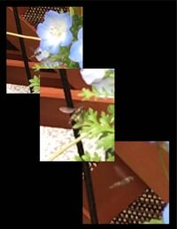 小さくてピンボケの写真で本当に恐縮のかぎりですが、ハチ又はアブと思いますが、細長く体長2cm弱(体に縞模様もあります)、結構長い間、ホバリングしてます。名前を教えてください。