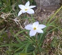 この花の名前を教えてくださいませんか。