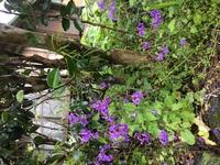 鹿児島県の山間部 庭に咲いていました。何という花か、子供の植物図鑑でははんべつしきれませんでした。 名前を教えていただきたいのですが、ご存じの方よろしくお願いいたします。