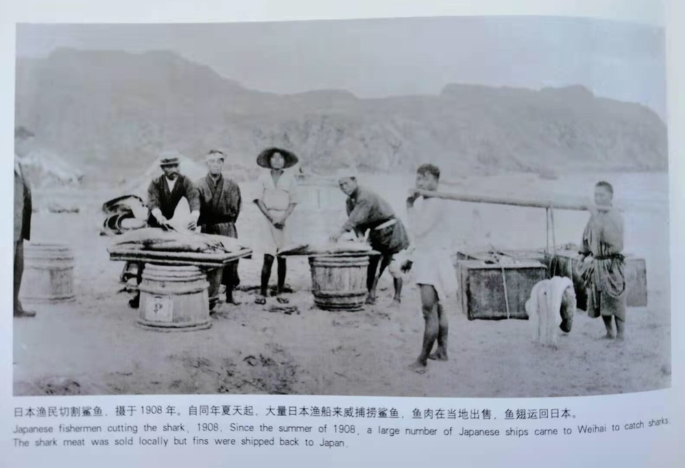 Japanese fishermen cutting the shark.1908. Since the summer of 1908.a large number of Japanese sh...