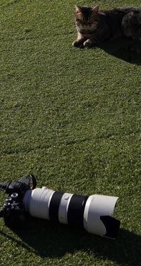 向井康二くんの白と黒が交互になってるカメラってどこのカメラでどこのレンズか分かりますか??