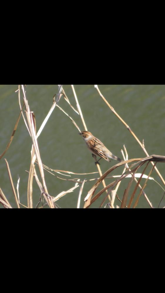 この鳥の名前わかる方いますか?