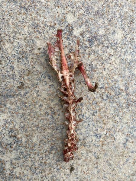 この骨は何の動物の骨ですか?