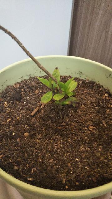 何の植物か、わかりますか ️教えてください。