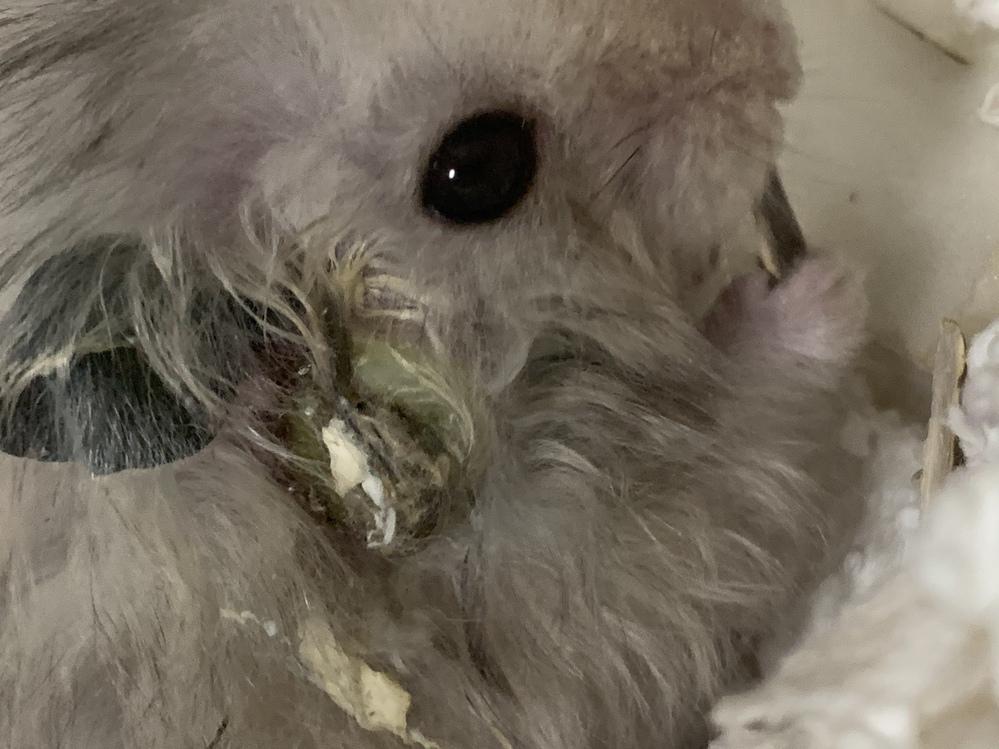 ハムスターの頬が2日前からこのような状態です。直ぐに病院に連れていく予定ですが、遠いのであと数日かかります。これは何の病気でしょうか。 怖いし心配です。
