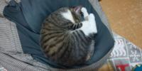 この猫ちゃんの種類は、何ですか