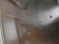 キッチンにカビのようなものが発生しましたが、カビキラーをしても取れませんでした。 これはカビなのでしょうか?