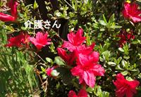 この花の名前は何ですか? 撮影場所は兵庫県で撮影日は2021年4月2日です。 よろしくお願いします。