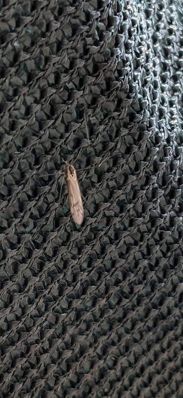 この虫は何ですか?最近出てき始めたんですけど。