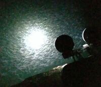 夜釣りで投光器を焚くと5~10センチぐらいの白っぽい?小魚が大量に寄ってくるのですが、この小魚の正式名称を教えてください。 写真は4月初旬です。