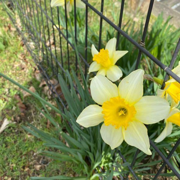 道端に咲いていた花です。 名前もわからず、花言葉を調べたくても調べようがないので名前を教えていただけると嬉しいです。