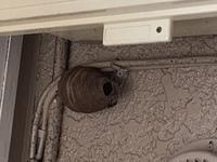 これって何の巣でしょうか? 外の壁にありました((( ゚д゚;)))