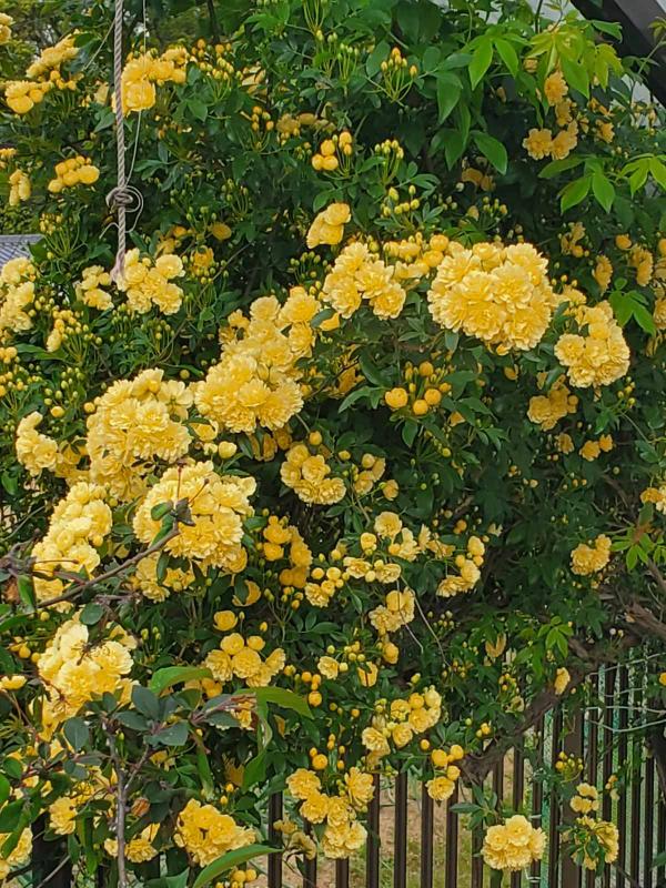 この植物の名前を教えてください!