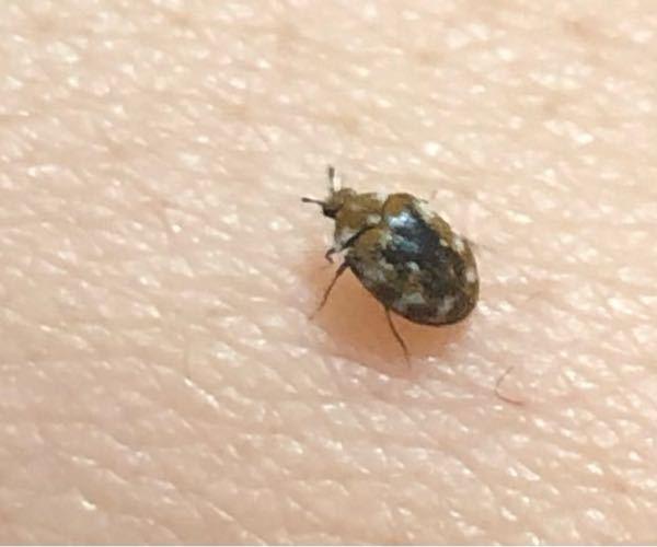 たまに家で見かけるこの虫は なんの虫なんでしょうか。 害のある虫なんでしょうか