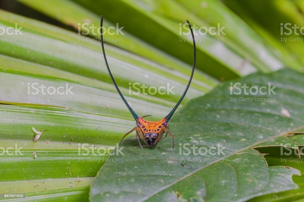 この蜘蛛は何という名前のクモでしょうか?